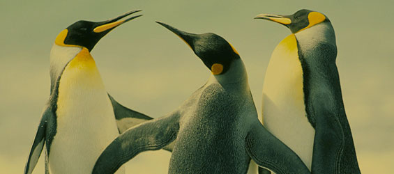 Penguin 3.0 Search Engine Optimization